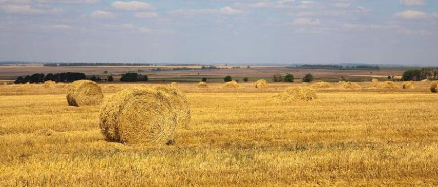 Picture of a field with hay bales.